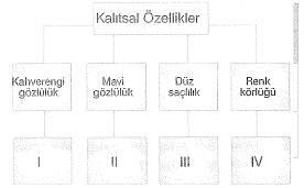 8-sinif-fen-bilimleri-hucre-bolunme-ve-kalitim-13-optimized