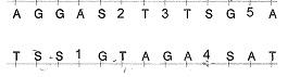 8-sinif-fen-bilimleri-hucre-bolunme-ve-kalitim-14