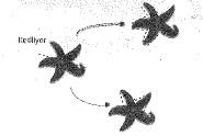 8-sinif-fen-bilimleri-hucre-bolunme-ve-kalitim-20