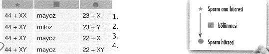 8-sinif-fen-bilimleri-hucre-bolunmesi-ve-kalitim-cozumlu-8-optimized